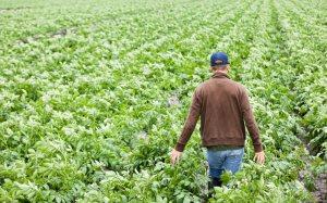 farmer_field_092713