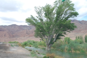 beautiful-tree-beside-tokoy-river